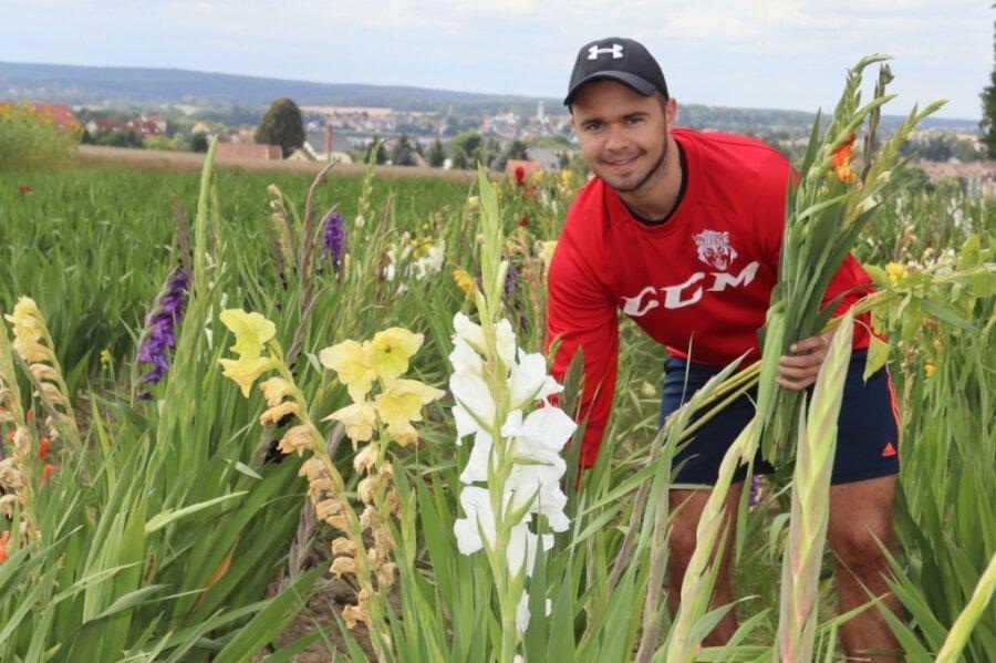 Gladiolen und Sonnenblumen für ehrliche Pflücker