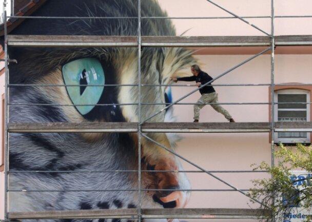 Im Herbst 2020 war Tasso in Waldenburg im Einsatz. Im Auftrag eines Tierarztes sprühte er einen acht Meter hohen Katzenkopf an eine Hauswand.