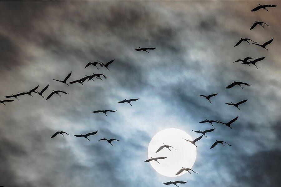 Kraniche auf ihrem Weg nach Süden beim hessischen Wetzlar: Der Zug der majestätischen Vögel hat begonnen.