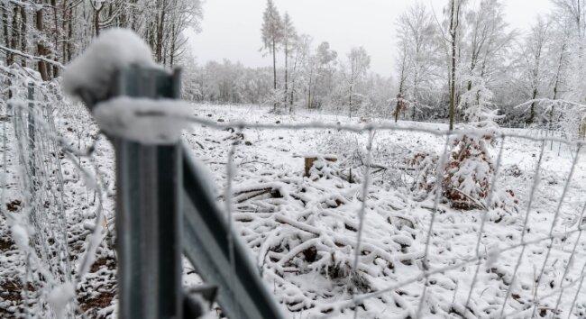 Auch im Rochlitzer Bergwald sind in den letzten Jahren durch Trockenheit und Borkenkäfer große Schäden entstanden. Diese Fläche in der Nähe vom Schillingbruch wurde im Herbst bei einer Baumpflanzaktion wieder aufgeforstet.
