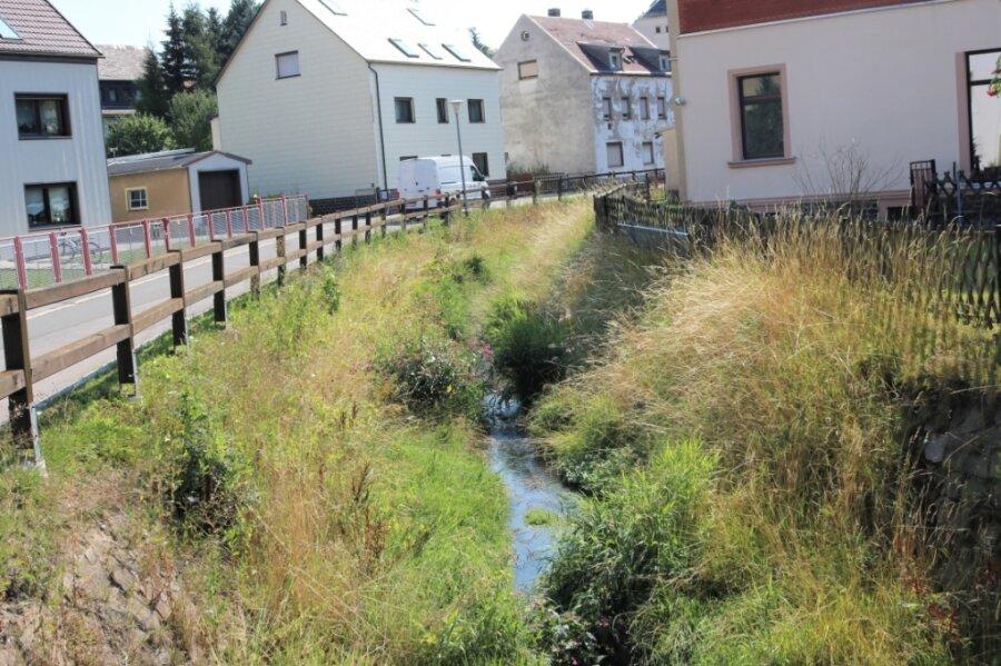 Der Bachlauf der Großen Lößnitz in Eppendorf ist vor Bewuchs kaum noch zu erkennen. Laut Landestalsperrenverwaltung sei das aber kein Grund zur Sorge.