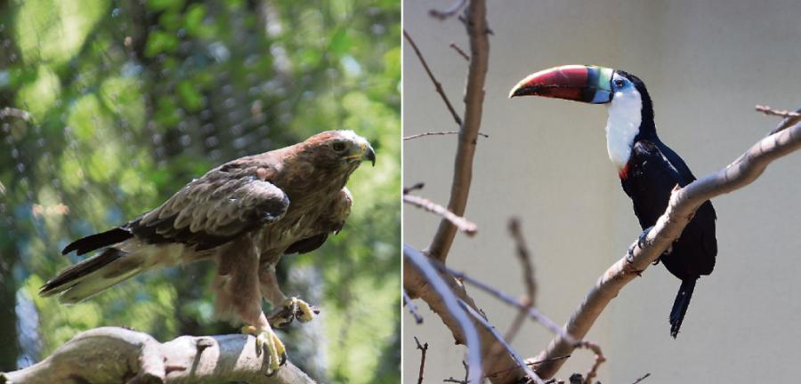 Neuzugänge bei zwei Vogelarten