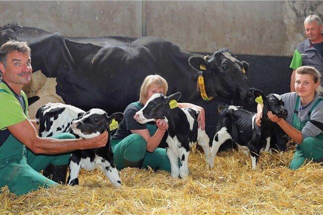 Eine Milchkuh der Agrargenossenschaft Blankenhain hat in dieser Woche Drillinge bekommen.