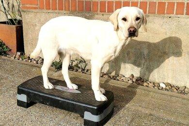 Der Labrador-Retriever für den kleinen Felix hört auf den ungewöhnlichen Namen Gurke.