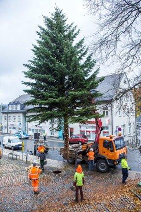 Zwölf Meter hoch ist der diesjährige Weihnachtsbaum in Buchholz.