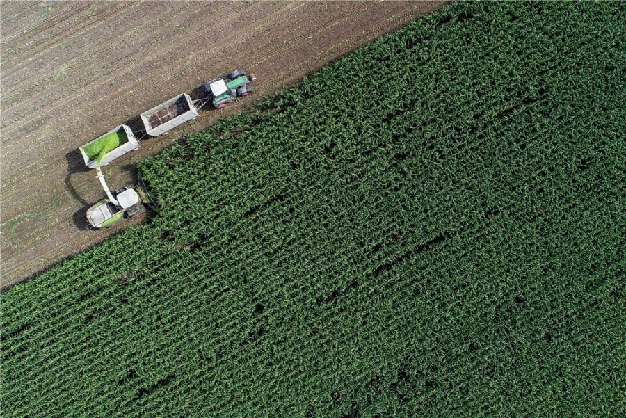 Maisernte auf einem Feld in Brandenburg. Die EU-Agrarreform könnte in Deutschland neue Verteilungskämpfe auslösen.