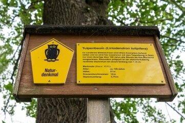 Neu ist, dass auch Naturdenkmale wie dieser 120 Jahre alte Milkauer Tulpenbaum mit aufgelistet werden.