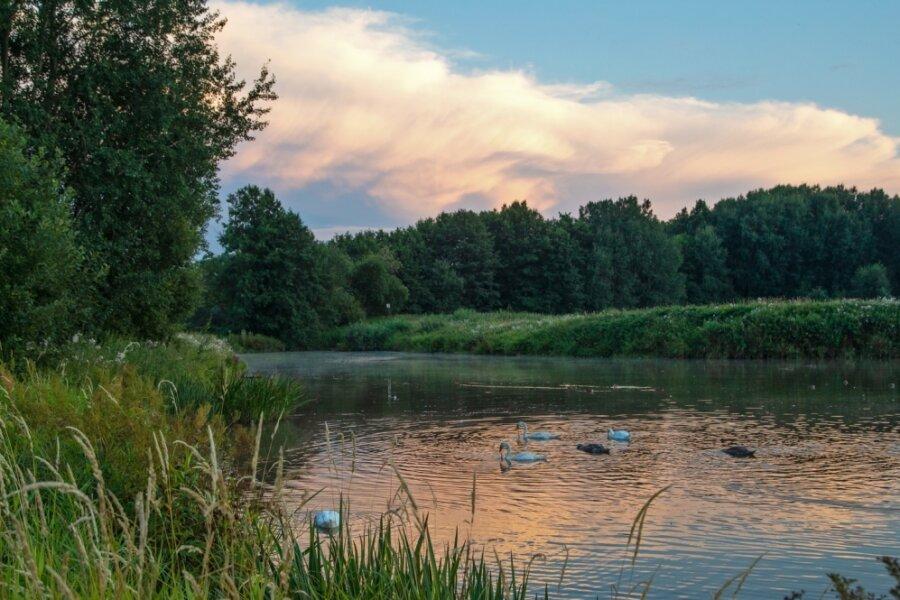 Abendstimmung im Limbacher Teichgebiet, das auch Brutgebiet für Vögel ist. Zunehmend ist das Naturidyll aber durch illegales Betreten des Areals sowie nicht angeleinte Hunde bedroht.
