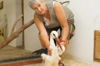 Tierparkleiterin Ramona Demmler mit dem inzwischen verstorbenen Storch.