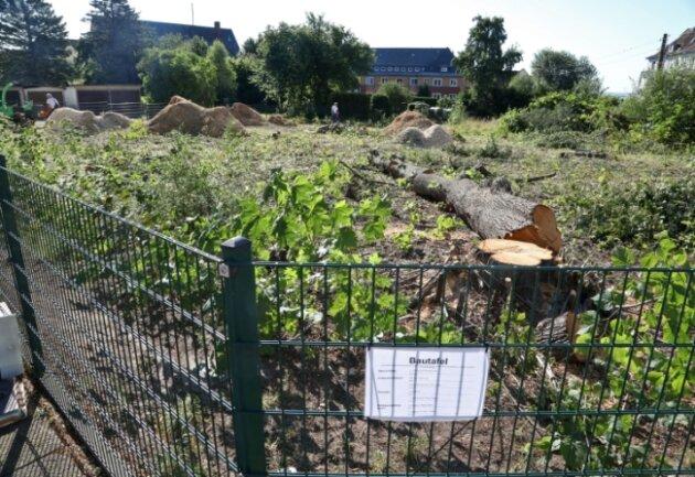 Der Baum auf dem Gelände an der Friedrich-Engels-Straße musste weichen. Ein Bauherr will aber neue Bäume anpflanzen.
