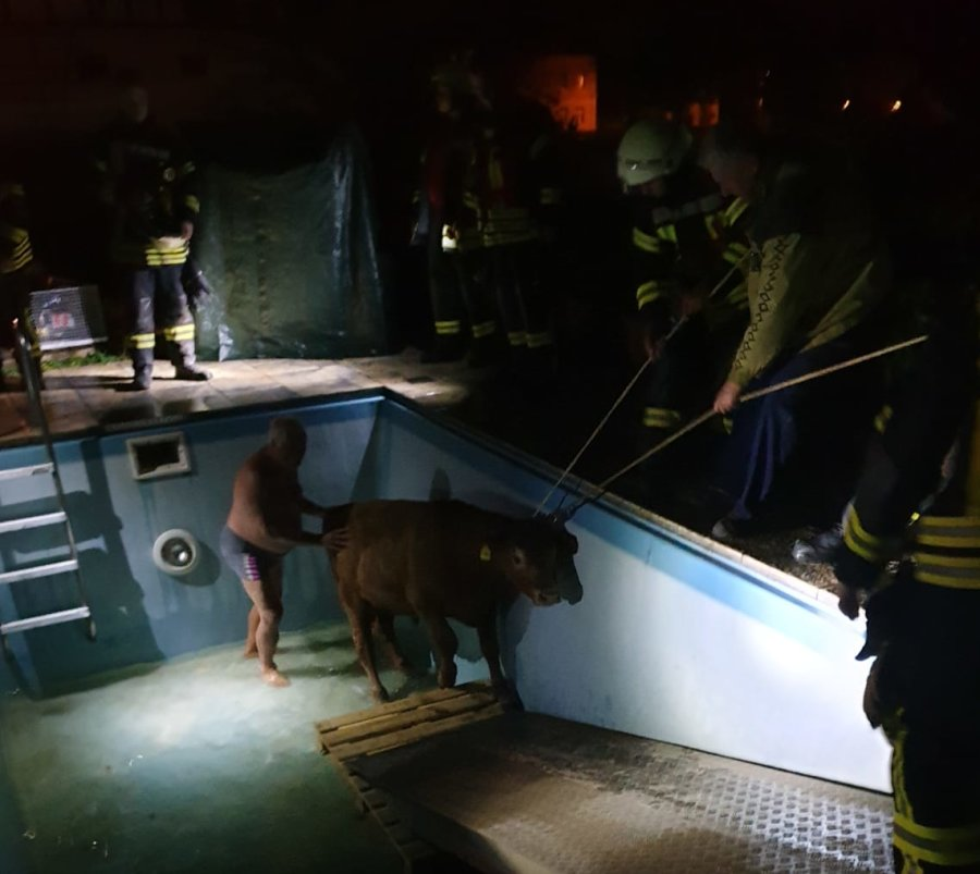 Kuh aus Pool gerettet