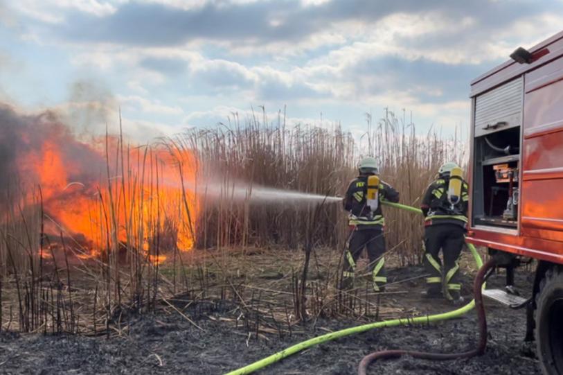 Rossau: Feuerwehren kämpfen 3 Stunden gegen Feldbrand