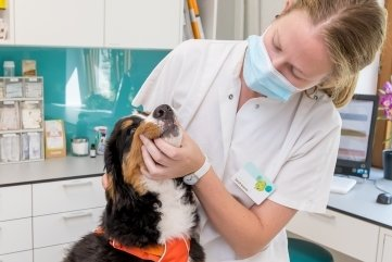 Tierärztin Sarah Krause mit Berner Sennenhündin Alva in der Tierklinik Marienberg, die die Petition unterstützt.