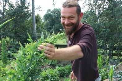 Aus diesem Eichblattsalat, der bald blühen wird, gewinnt Sebastian Kramer Samen.