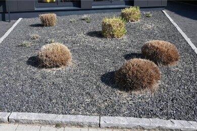 Ein paar Pflanzen und ganz viel Kies: Schottergärten