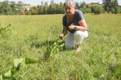 Anwohnerin Gudula Bartosch auf der Wiese am Glösaer Weg in Auerswalde, welche mit Häusern bebaut werden soll. Sie lehnt das Bauvorhaben ab.