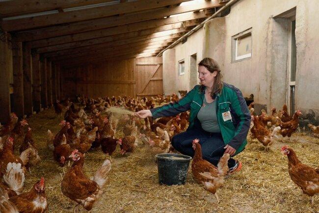 Wegen der Geflügelpest müssen die Hühner von Bio-Bäuerin Sarah Kretzschmar in Gersdorf derzeit im Stall bleiben.