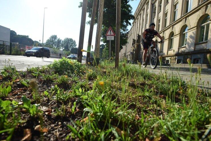 Passanten kritisieren, dass auf den Baumscheiben vor der Polizeidirektion an der Hartmannstraße Unkraut wächst.