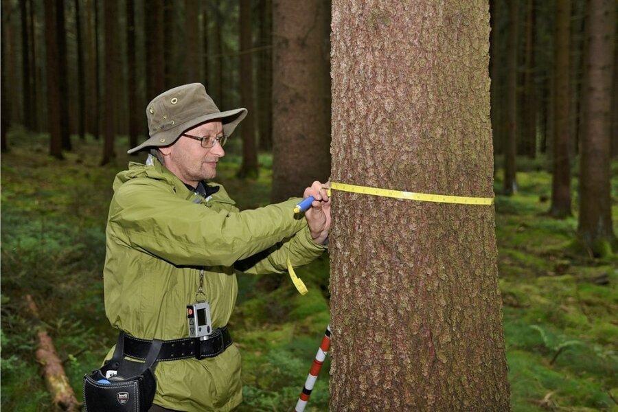 Neben viel Technik gibt es zum Daten-Sammeln auch Klassiker wie das Maßband, mit dem Forstwirt Steffen Hilpert den Baumdurchmesser ermittelt.