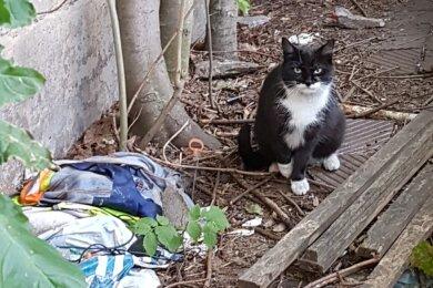 Zuhause im Müll: Eine der herrenlosen Katzen von Annaberg.