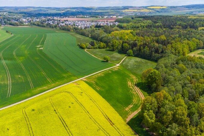 Ein Blick auf das Gebiet des Neukirchener Waldes. Hier möchte die Gemeinde einen Waldfriedhof einrichten.