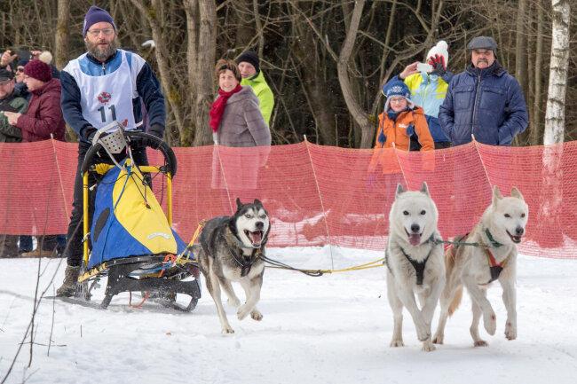 Musher Raimund Kupka trat am Samstag mit seinen Huskys auf dem Bad Einsiedler Trail an.