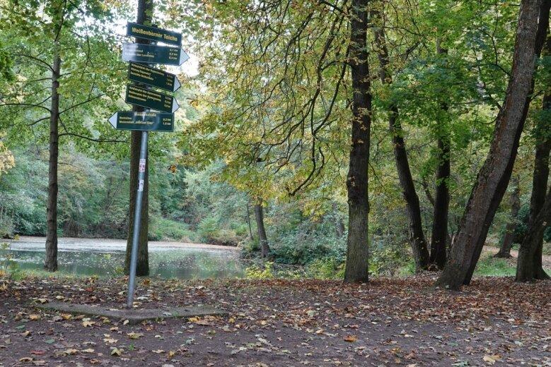 In der Nähe dieser Weggabelung im Weißenborner Wald starb im Juni 1949 ein Polizist durch einen Kopfschuss.