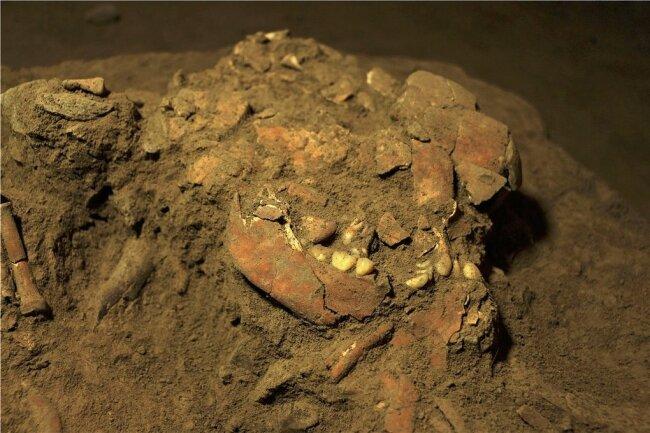 Anhand von aus diesem Schädelfund von der Insel Sulawesi isolierter DNA wollen Wissenschaftler mehr darüber herausfinden, von wem die Menschen abstammten, die vor Jahrtausenden als erste den australischen Kontinent besiedelten.