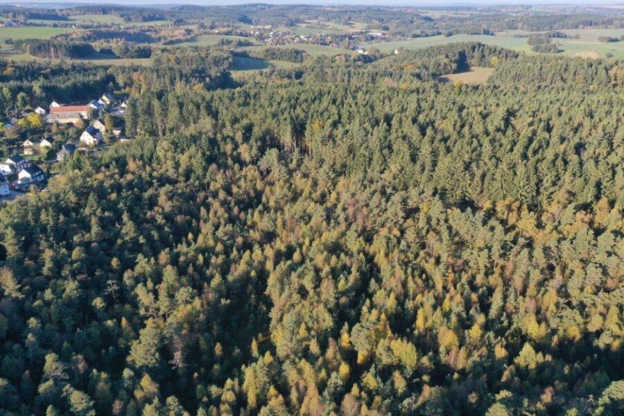 """Von oben präsentiert sich das Gebiet bei Obercrinitz als dichter Wald. Wer die Besonderheiten der Moorlandschaft sehen will, muss sich schon von unten """"herantasten"""" - an die seltenen Pflanzarten, die nur in diesem feuchten und sumpfigen Gebiet gedeihen."""