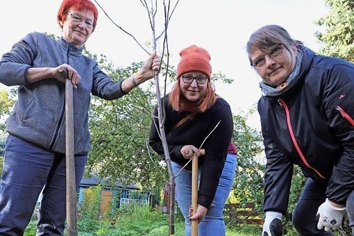 Elke Koch, Jenny Fritzsche und Carola Zscheile (v. l.) pflanzten innerhalb der Aktion in einem Privatgarten am Meißner Ring eine Edeleberesche.