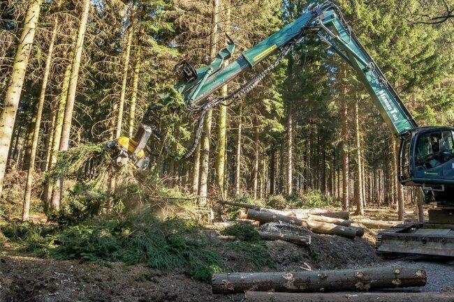 Von geeigneten Waldwegen aus kann der Raupenharvester bis zu 15 Meter entfernte Bäume fällen und über den nachwachsenden Mischwald heben.