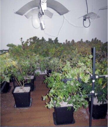 Im Stadtteil Hilbersdorf stießen Polizisten auf eine Indoor-Plantage mit mehr als 30 Cannabispflanzen.