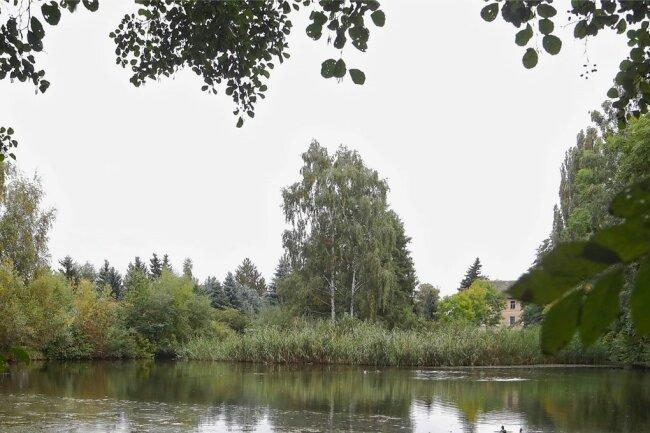 Die Sportfischer übernehmen ab Anfang 2022 die Bewirtschaftung vom Mühlteich.
