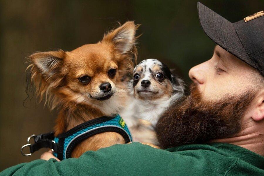 Tierheim-Mitarbeiter Chris Wolfrum kümmerte sich intensiv um die Chihuahuas. Nun steht fest, die Hunde kehren nicht zu den ehemaligen Eigentümern zurück und dürfen vermittelt werden.