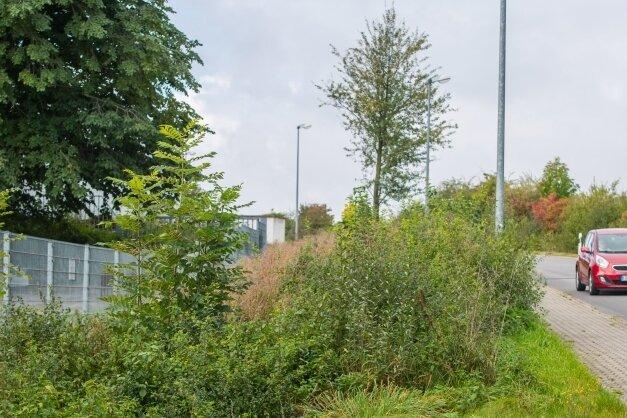 An der Wilhermsdorfer Straße in Jahnsdorf hatte der Bauhof im Frühjahr eine Hecke abgeholzt. Nun sind Sträucher nachgewachsen. Zudem wurden neue Bäume gepflanzt.