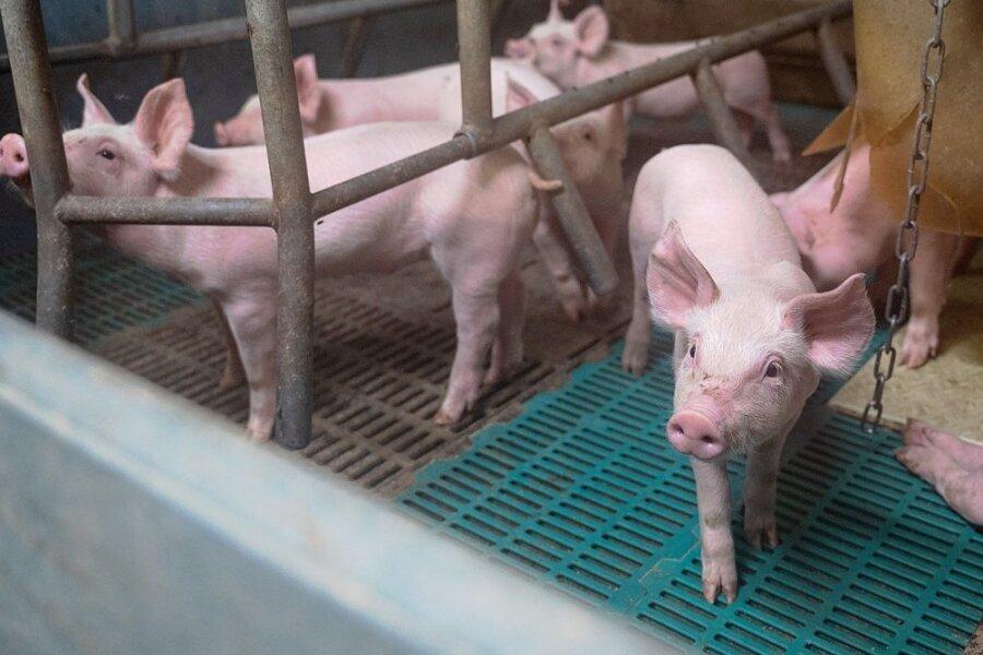 Derartige Spaltenböden, wie sie in Schweineställen verwendet werden, haben zwei Mittelsachsen von einem Landwirtschaftsbetrieb gestohlen.