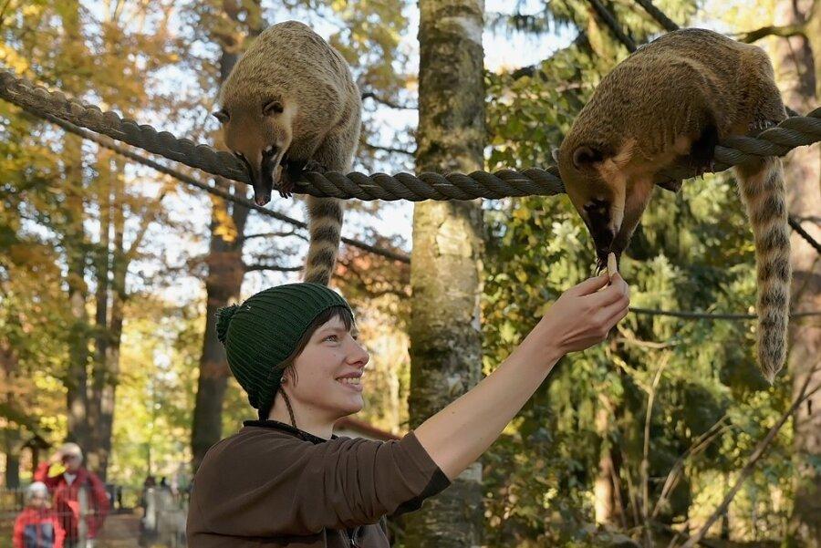 Zootierpflegerin Patrizia Weidlich im Gehege der Südamerikanischen Nasenbären. Eine Patenschaft für diese Tiere kostet 80 Euro pro Jahr.