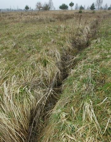 """<p class=""""artikelinhalt"""">Sind die Entwässerungsgräben illegal angelegt worden? Umweltexperten nicken.</p>"""