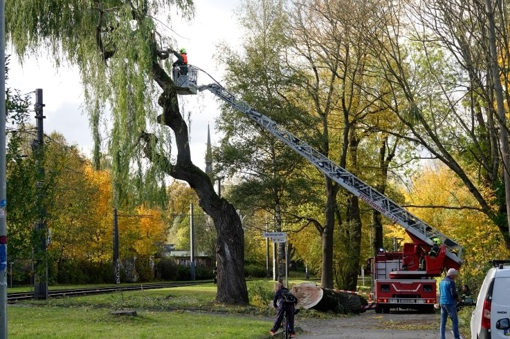 In Höhe der Adelsbergstraße drohten Teile eines Baumes auf die Straßenbahnstrecke der Linie 5 zu fallen. Die Feuerwehr griff ein.