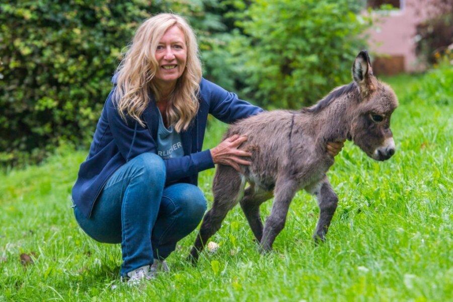 Tierisch süß: Nachwuchs bei Mini-Eseln und Mini-Ziegen