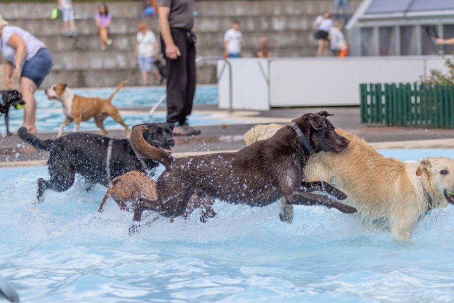 Nicht nur Zwei-, sondern auch Vierbeiner genießen den Ausflug ins Freibad - wie hier am vergangenen Samstag im Buchholzer Freibad. Dort kamen rund 80Hunde, um sich abzukühlen und vor allem ausgiebig miteinander zu spielen.