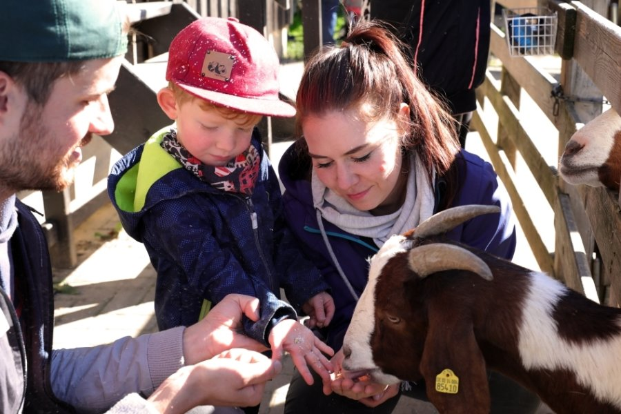Tierparkfest und Streuobstmarkt locken zum Ausflug am Wochenende