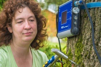 Christiane Müller untersucht einen alten Baum mit einem Schalltomographen.