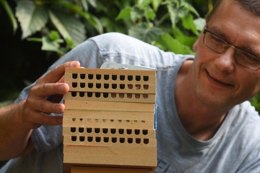 Dirk Liesch und sein Nistkasten für Mauerbienen: Um Wildbienen wie diese zu schützen, ruft er Vereine, Kleingärtner und Stadtteilzentren auf, sich ebenfalls einen Nistkasten auf den Balkon oder in den Garten zu stellen. Die zugeklebten Löcher zeigen, dass sich dort Bienen eingenistet haben.