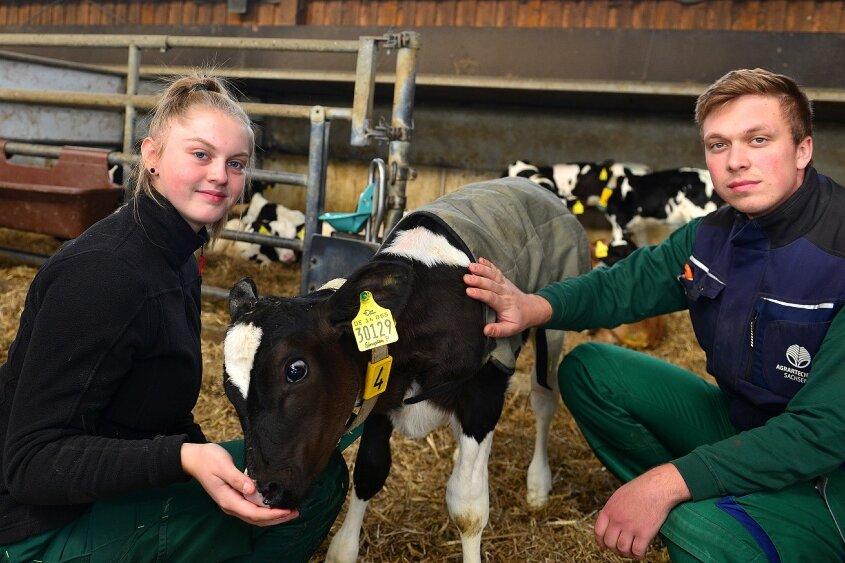 Aimy Junghans und Rico Hainich im Kälberstall der Agrargenossenschaft in Cunnersdorf. Die 17-Jährige aus Bockendorf hat eine Lehre als Landwirtin begonnen. Sie mag den Umgang mit Tieren. Rico ist als Sohn des Vorstandsvorsitzenden mit Landwirtschaft groß geworden und heute Leiter der Milchviehanlage.