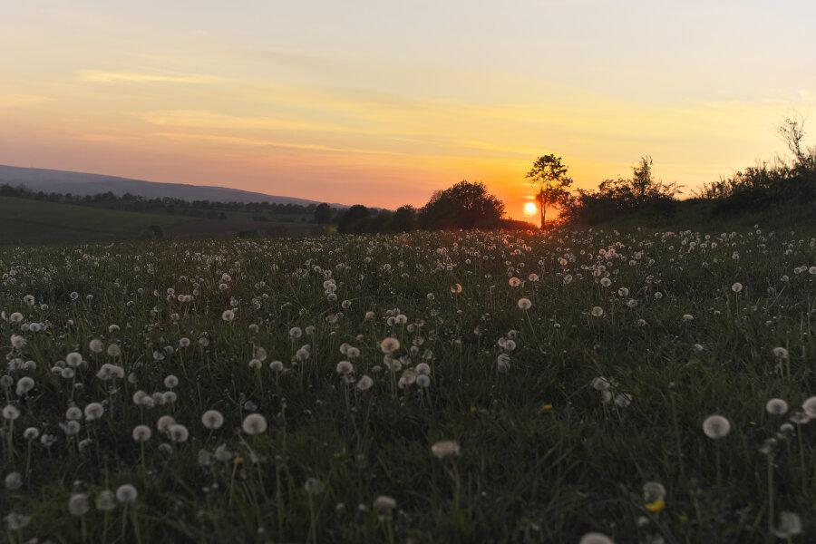 ...ein Frühlingsabend bei Großrückerswalde