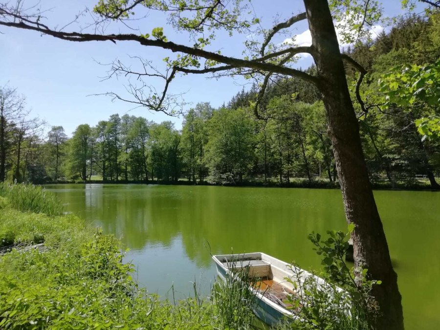 Teich zwischen Gelenau und Wilischthal