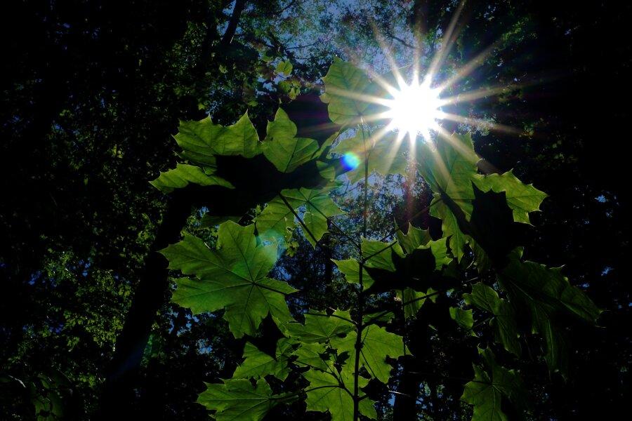 Die Mai - Sonne scheint durch den Wald bei Hartenstein.